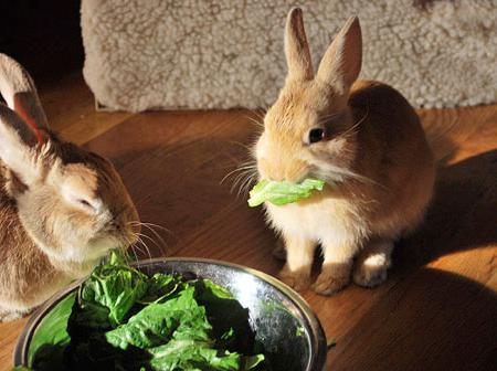 гранулированный корм для кроликов