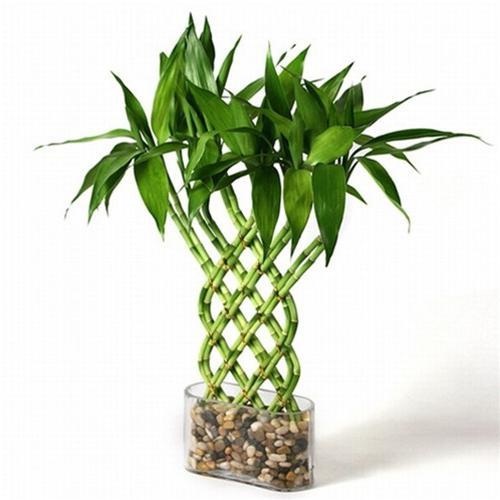 Растения уход в домашних условиях
