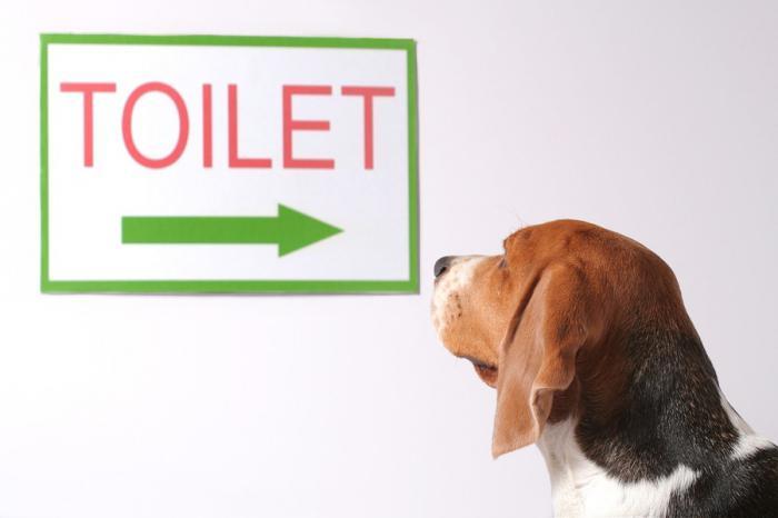 Как приучить щенка ходить в туалет в одно место