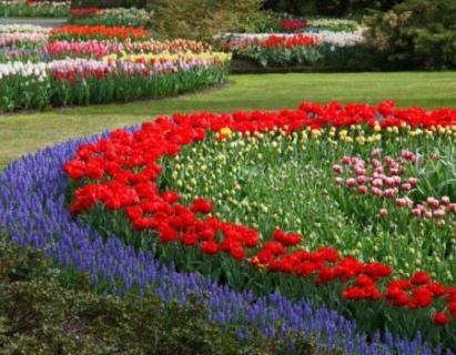 photo flower beds
