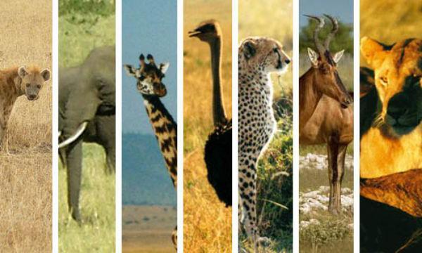 Картинки по запросу животный мир африки