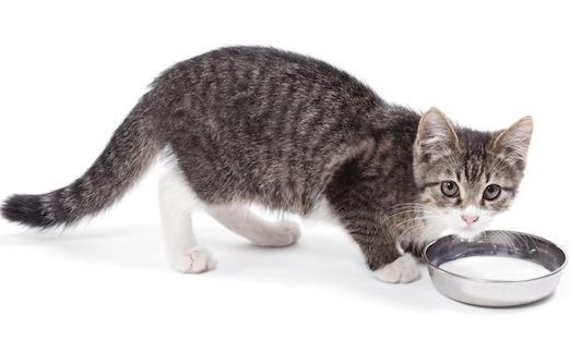 сколько раз кормить кормящую кошку
