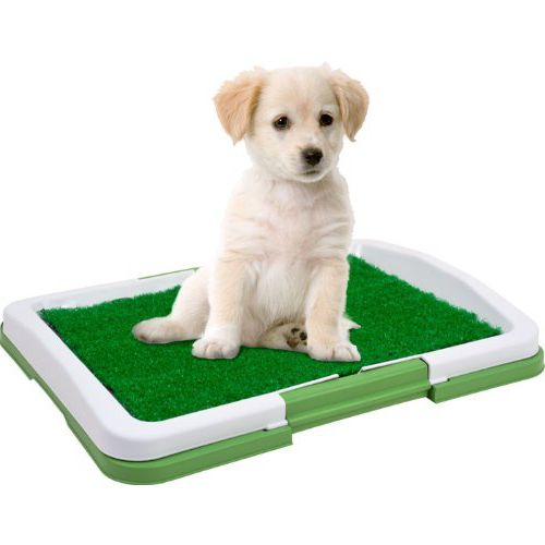how to teach a puppy to the tray