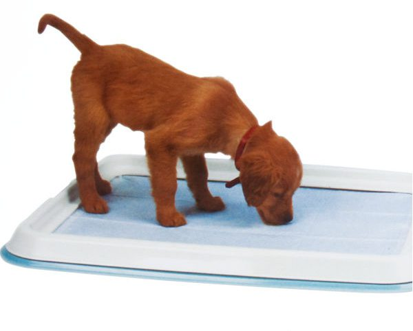 how to teach a dog to the tray