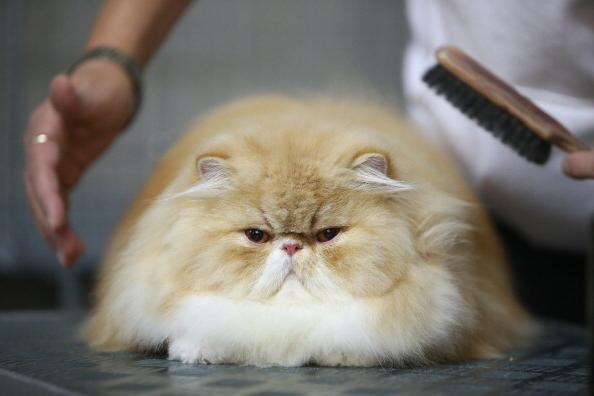 the cat got dandruff