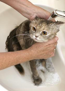why do cats have dandruff on their backs