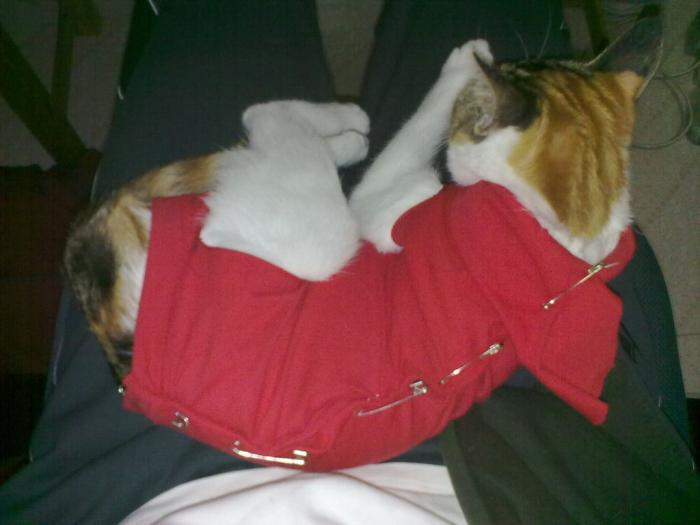 запор у кошки после стерилизации лечение в домашних условиях