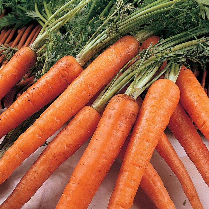when to pick up carrots