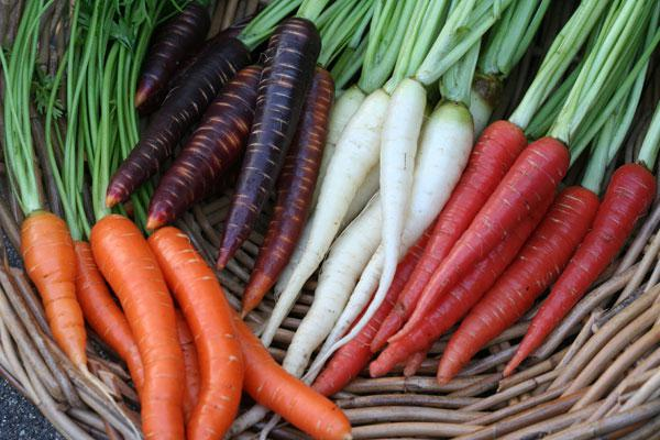 carrots for the winter