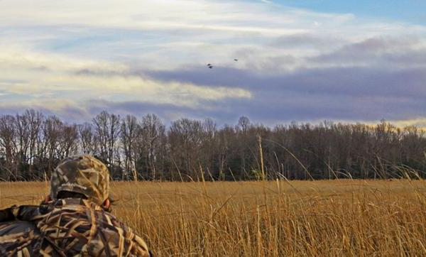 duck hunting from the approach