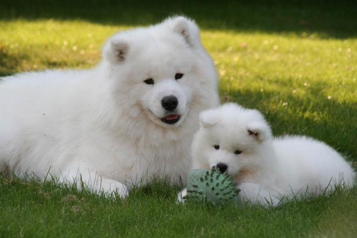 породистых собак с названиями