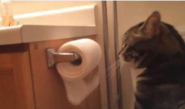 лечение запора у кошек