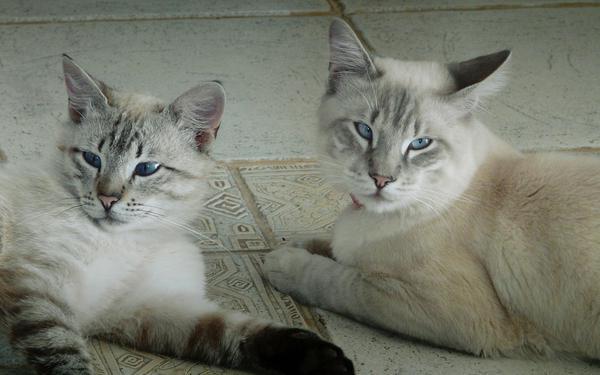 Глаза у кошки чем промыть кошке глаза