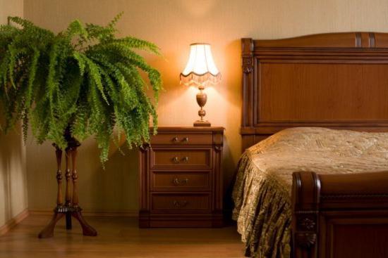 Теневыносливые комнатные растения
