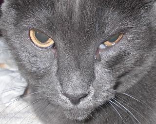 У кота глаз слизится