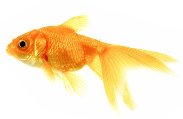 aquarium fish species compatibility