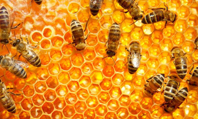 Помогает ли мед при геморрое Рецепты народной медицины