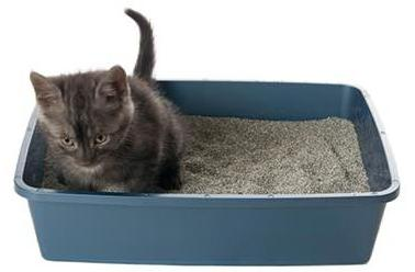 how to teach a cat to pot