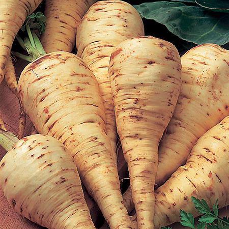 plant parsnips useful properties