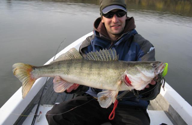 on which bait to catch zander