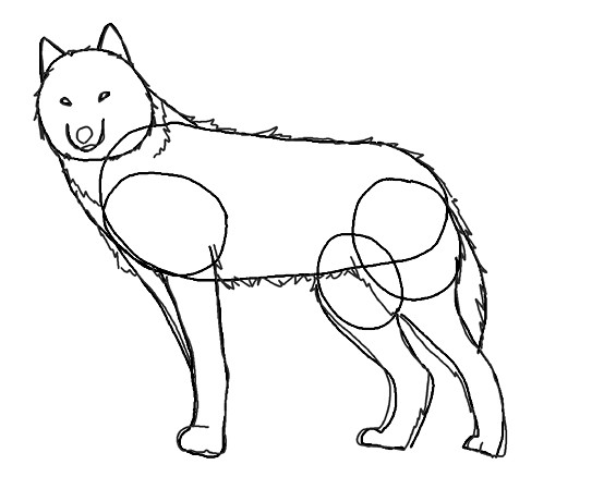 Как нарисовать морду волка