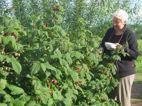 Raspberry tree photo