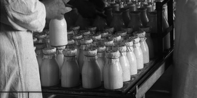 производство пастерелизованного молока