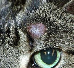 Грибок у собак: симптомы и лечение