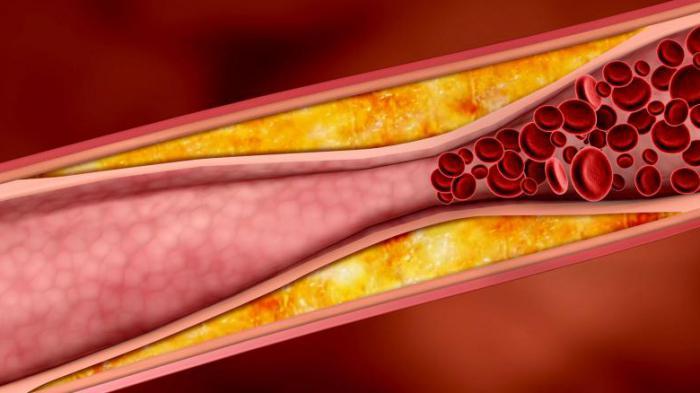 нужен холестерин в крови