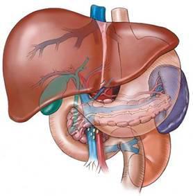 Эффективное лечение жирового гепатоза печени