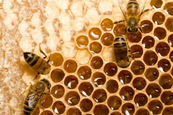 Как сделать пчел которые дают опыт в minecraft