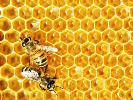зачем закармливать пчел на зиму