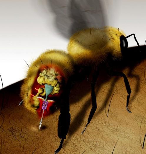 Укусила пчела - опухла нога
