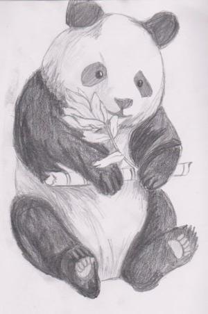 Панда картинки нарисованная 6