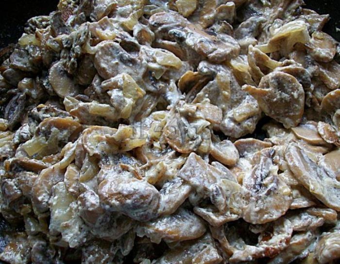 коровники фото грибы