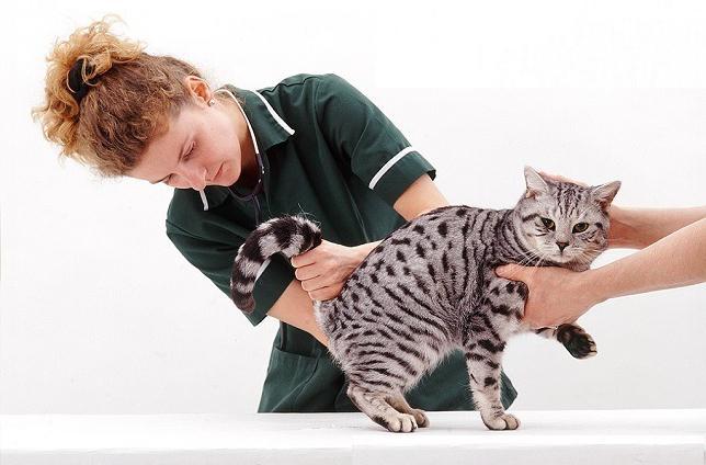 мочекаменная болезнь симптомы у котов