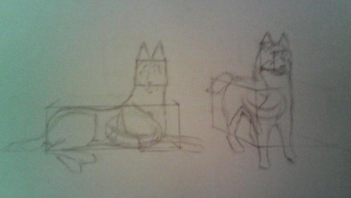 как нарисовать собаку хаску