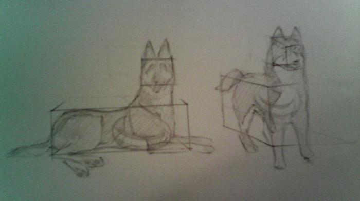 как нарисовать собаку овчарку