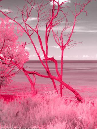 сочетается ли синий с розовым