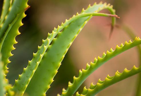 Лосьон от псориаза дипросалик - Псориаз