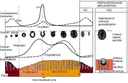 На какой день цикла начинают стимуляцию при эко - 80