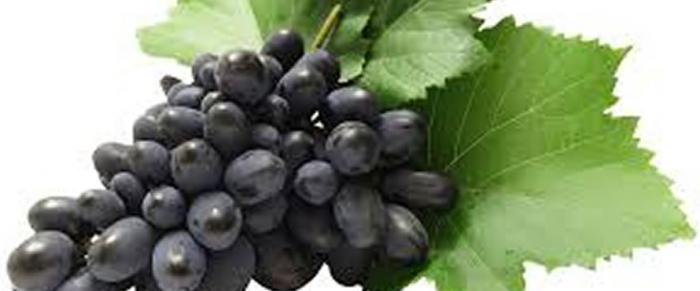 Grapes calories