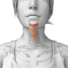 thyroxine hormone is reduced