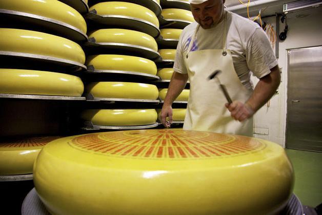 Сыр «Российский»: калорийность, белки, жиры, углеводы