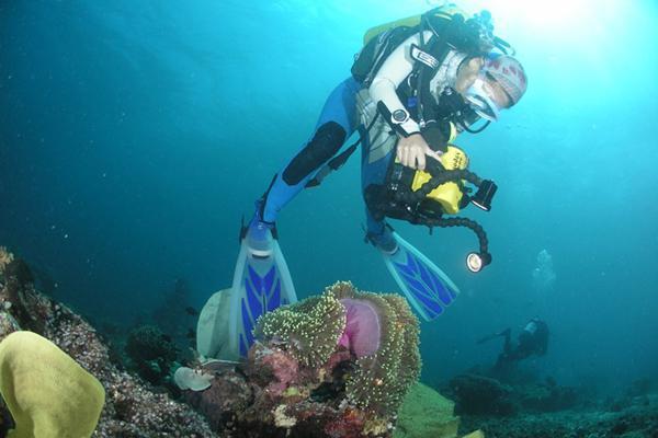 disposable underwater camera