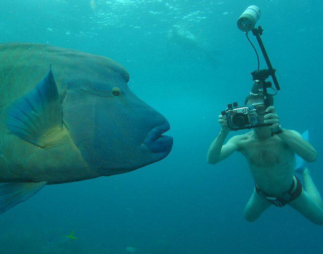 waterproof underwater cameras