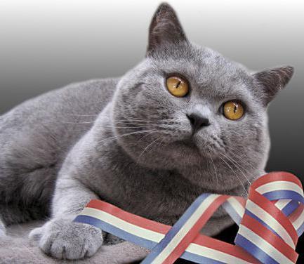 знакомство с котами для кошек