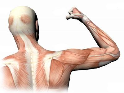атрофия мышц причины