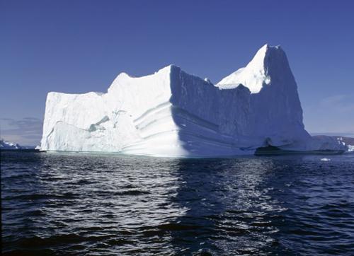 Эндемики арктики