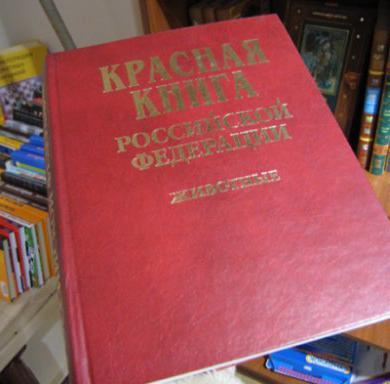 лесные животные красной книги России
